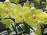 p20_Orchid.jpg